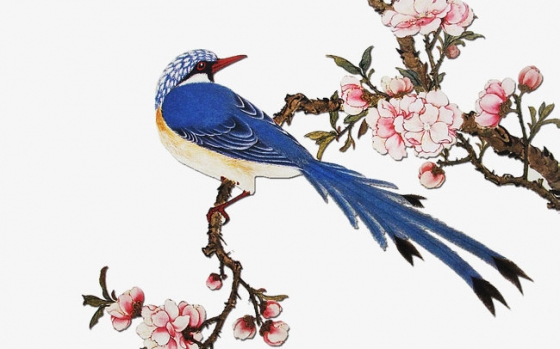 China Blue Bird